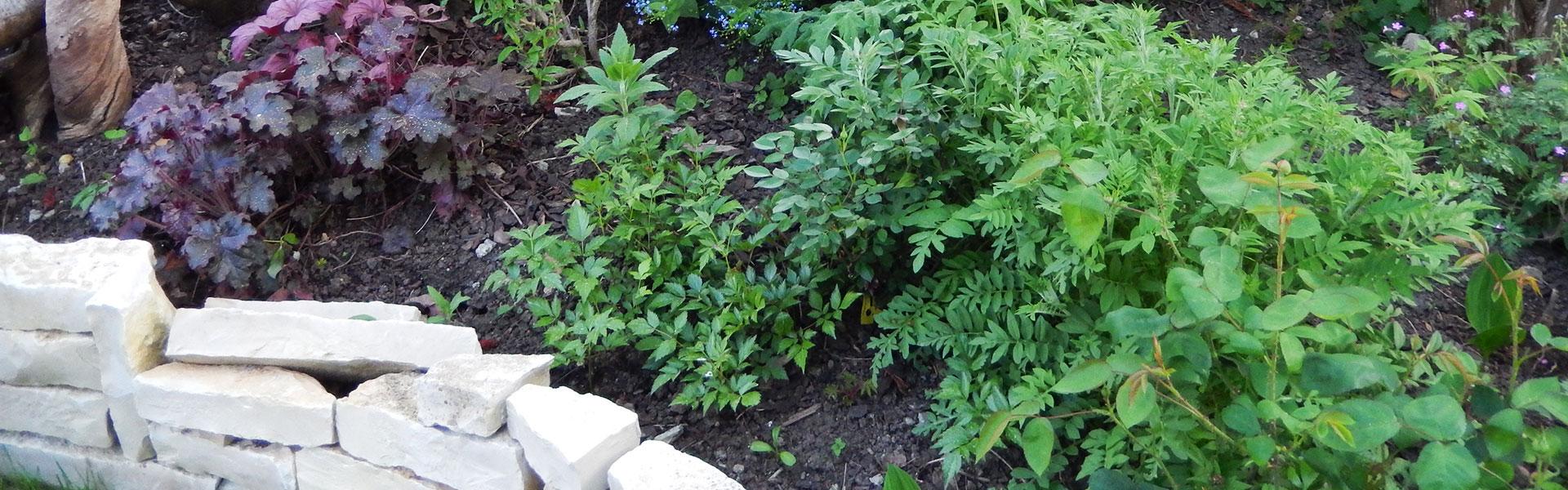 Amenagement Jardin Exterieur Photo plus que pro